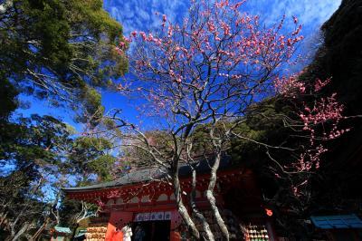 撮影・ウォーキング「鎌倉・梅の一番咲き」