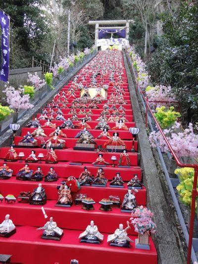 2013.02.23勝浦のひな祭り、千倉の花ミニウォーク
