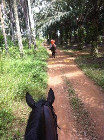 シンガポールからジョホール・クライへ行って乗馬体験
