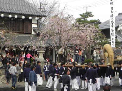 近江・京都 桜の旅 2 近江八幡・八幡祭