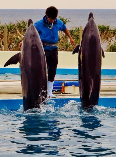 沖縄10 海洋博公園 オキちゃん劇場で ☆イルカたちの躍動ショー