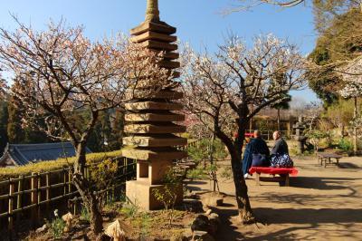 鎌倉、梅観て歩き:「円覚寺」