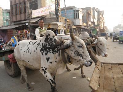 PAKISTAN 2 ラホール城壁まで旧市街の賑わい Lahore
