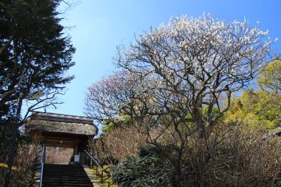 鎌倉・梅観て歩き:「東慶寺」