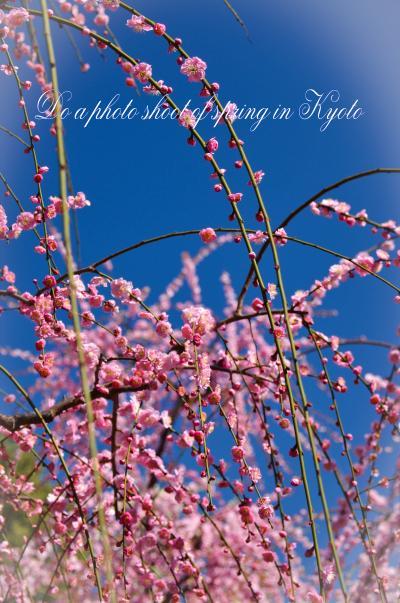 春の日の京都で花を撮る