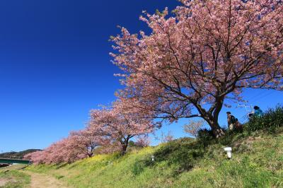 撮影・ウォーキング「みなみの桜と菜の花畑」