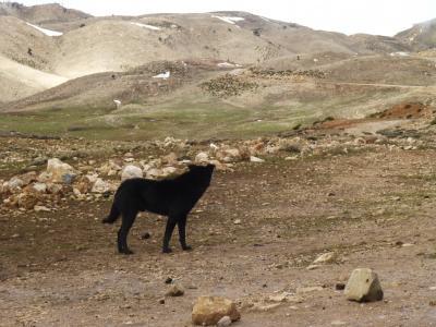 モロッコ5・・峠を越え雪の残る森林地帯へ