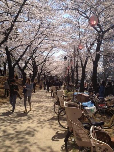浮間公園 桜まつり