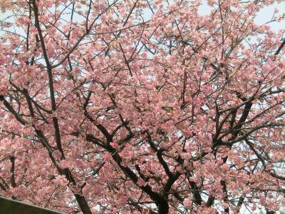色とりどりの花さんぽ in浦和