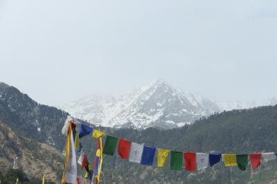 北インドの旅 2) マクロード・ガンジ (ダラムシャーラー)&トリウンド