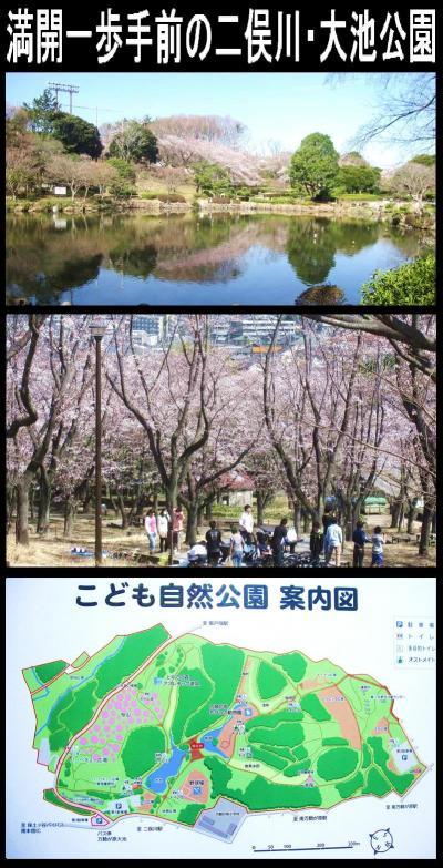 満開一歩手前の二俣川・大池公園
