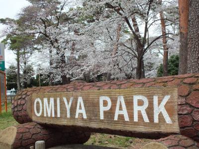 2013年 今年も大宮公園へ花見に行ってきました。