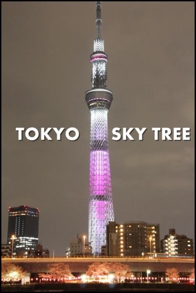 【花見しながら街歩き】 隅田公園から桜特別ライティングの東京スカイツリーへ