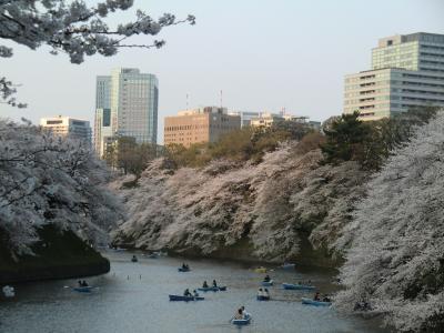 2013年3月 桜(王子、九段下、浦和)