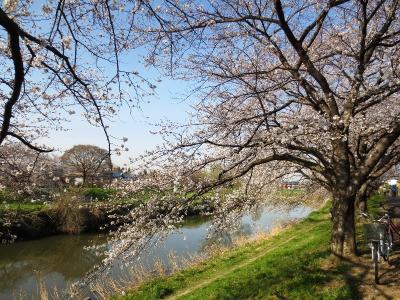 <五街道ウォーク・日光街道編.5>春を感じる旧街道 桜を眺め 「越谷宿」~春日部へ