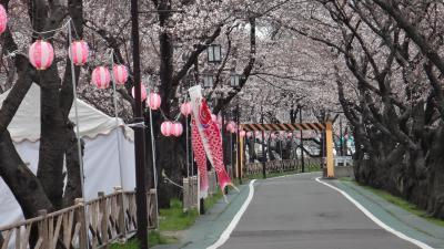 清洲の桜もお城と共にいいですよ!早咲き桜が咲き始めです。