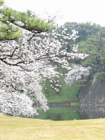 母とはじめてのお花見 皇居 北の丸公園 千鳥が淵