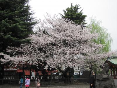 平成25年東京、桜花見