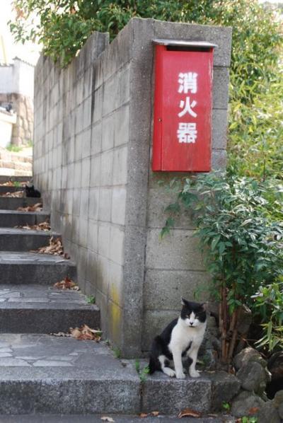 ★ちょこっと福山 鞆の浦とか 杏まつり とか★