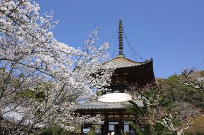 和歌山の4つの早咲き桜めぐり