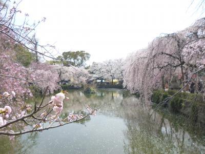 西伊豆(土肥)周辺旅 桜スポット