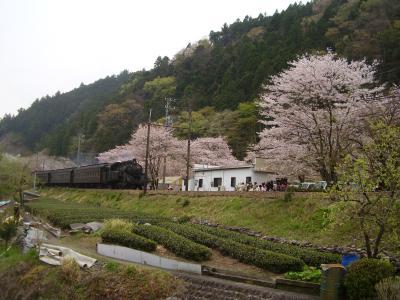 2013年 静岡の桜