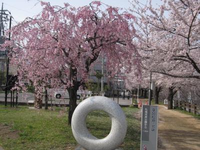 草加 綾瀬川 桜 4月 花吹雪☆2013/04/01