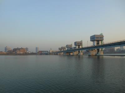 淀川河川敷でバードウォチング 3
