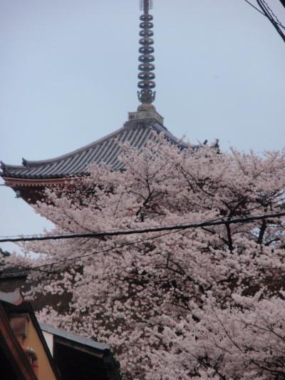 京都のさくら・・・・清水寺の満開のさくら・・・・300%の人気!さてあなたならどうする?