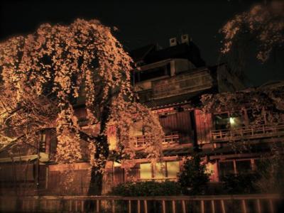 ★ちょこっとちょこっと京都 白川の夜桜 と 夜カフェはしご★