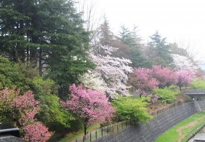 Japan 昭和記念公園 2013 雨の日のしあわせ ~ミツバチばあやの冒険~