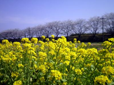 旧初瀬街道: 春爛漫