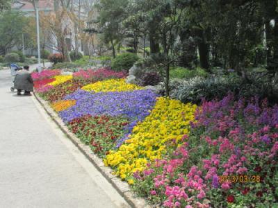 上海の天山公園・13年春