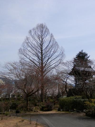 神鍋高原へドライブ