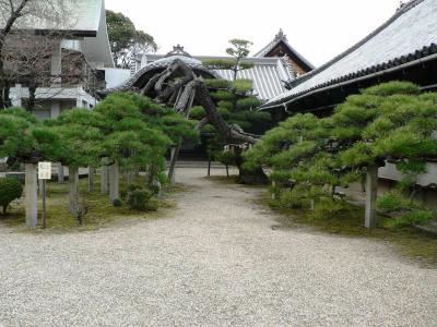 日本の旅 関西を歩く 大阪府守口市、来迎寺(らいこうじ)周辺