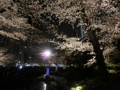 六本木アートナイト&お花見(2013年3月)