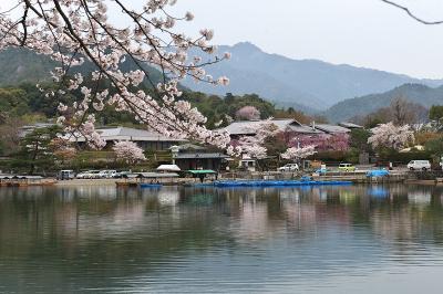 京都で花見三昧