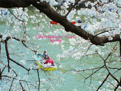春の東京散歩~桜の名所 千鳥ヶ淵~靖国神社~浅草ぶらり
