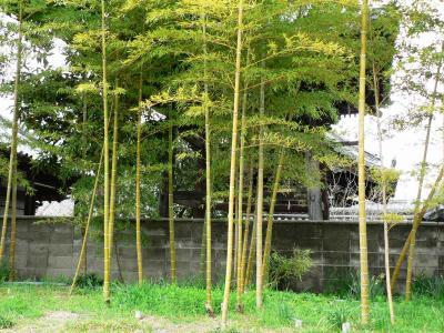 日本の旅 関西を歩く 大阪府守口市、管相寺(かんそうじ)、佐太陣屋(さたじんや)跡周辺