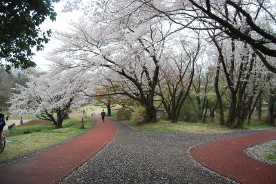 初めて航空記念公園を訪問する②美しい桜が見られる風景