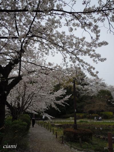 哲学堂で桜♪