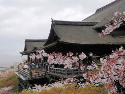 爆弾低気圧に邪魔されながら京都花めぐり 清水寺
