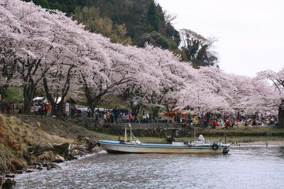 2013年最後の桜は海津大崎へ