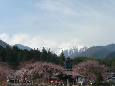 高遠・駒ヶ根の桜巡り 2013年②