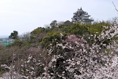 高松出張・鳴門祖谷旅行3-鳴門妙見山公園の桜