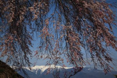 2013・04 桜を追いかけて長野へ行こう 2