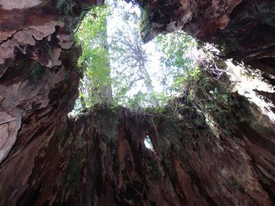 縄文杉に会えました♪