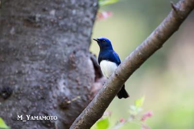 春の大阪城、鳥撮影