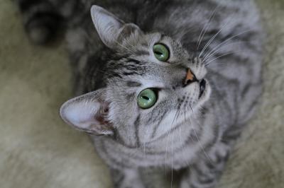 【猫カフェ60】 ようこそ☆猫のいるカフェへ 「小倉猫茶屋」
