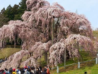 週末パスで春の福島へ・後篇(郡山~三春の滝桜と町内の桜めぐり)